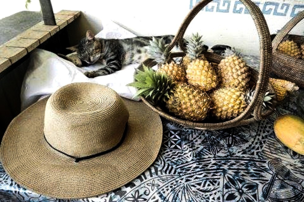 Teitei permaculture farm stay Fiji