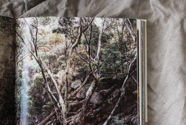 Shelter by Kara Rosenlund