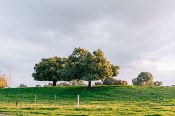 Dunmore-Farm-9