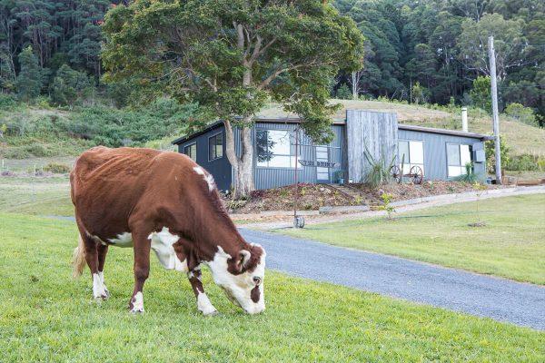 The-Old-Dairy-Tweed-Coast-9