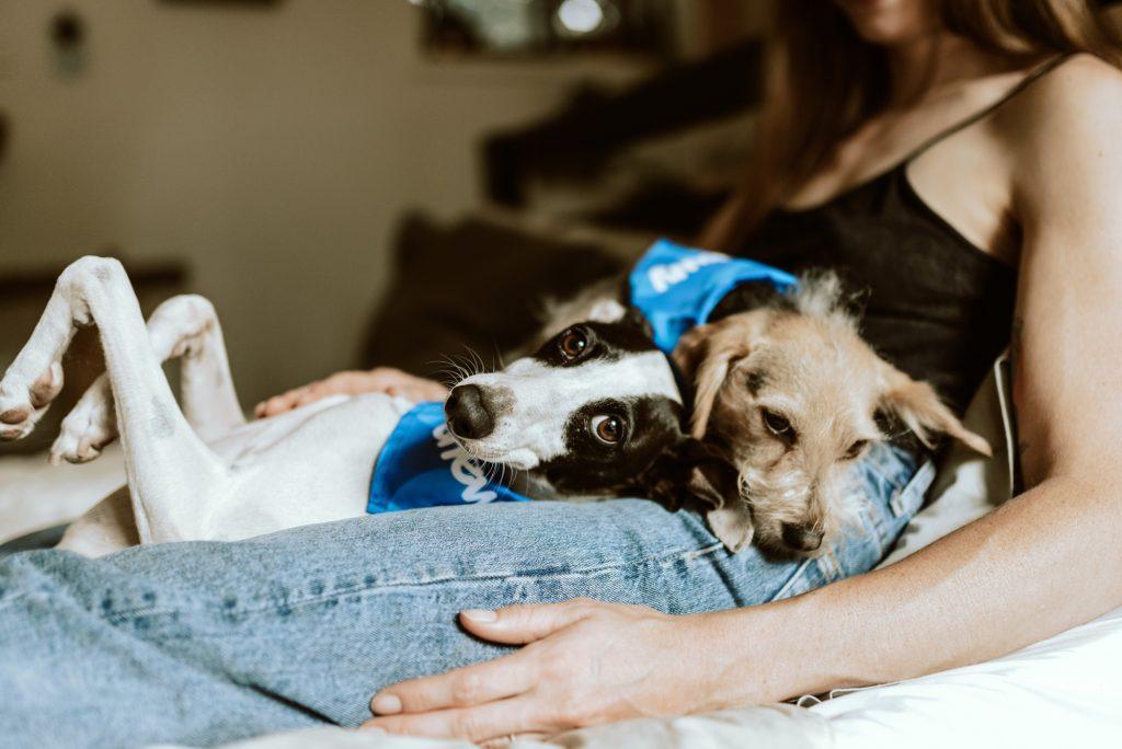 Pet friendly accommodation slow stays