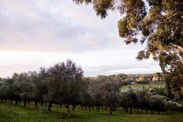 Hart's Farm Mornington Peninsula