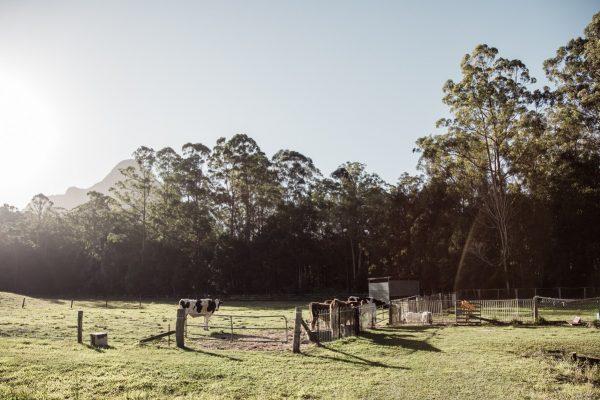 Sunshine Coast Farmstay Life Unhurried Slow Stays-12